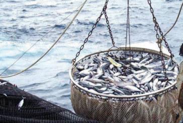 La Russie souhaite renforcer la coopération avec le Maroc dans le domaine de la pêche maritime