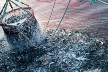 """UE s'engage sur 10 ans pour """"sauver"""" les stocks de poissons en Méditerranée"""