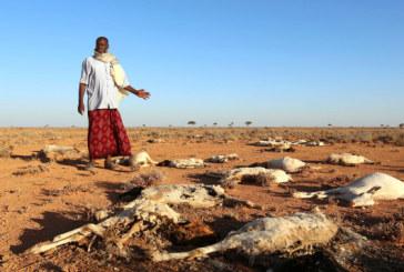 Somalie: 110 décès en 48 heures à cause de la sécheresse