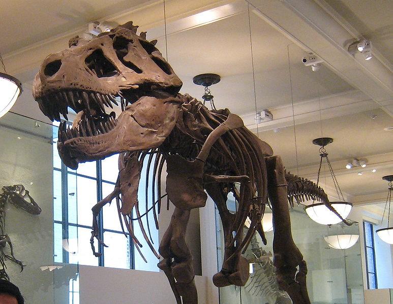 Enquête préliminaire sur la mise aux enchères d'une queue de dinosaure originaire du Maroc au Mexique