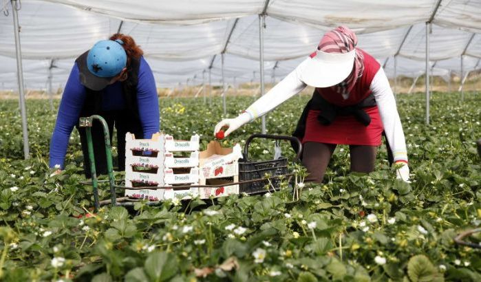 10.400 nouveaux contrats de travailleurs agricoles saisonniers marocains