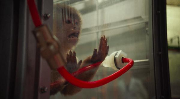 Tests controversés sur des singes et des humains: suspension d'un responsable de Volkswagen