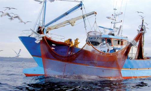 L'INRH consolide ses actions en faveur de la gestion durable des ressources halieutiques