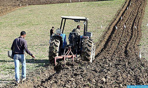 Agriculture: Une évolution favorable suite à une amélioration continue des conditions de la campagne