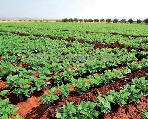 L' agriculture reste le secteur le plus exposé aux effets des changements climatiques