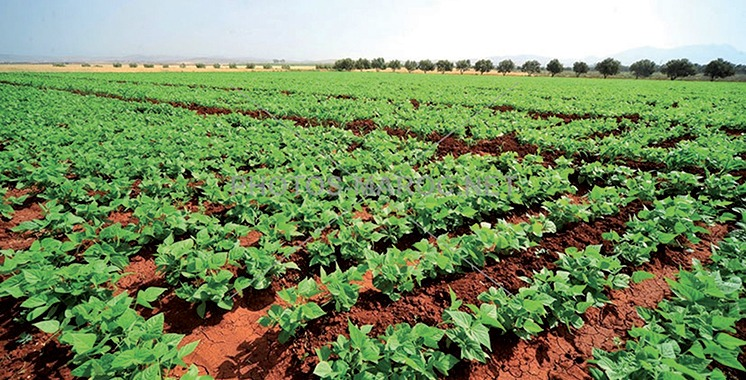 L'agriculture reste le secteur le plus exposé aux effets des changements climatiques