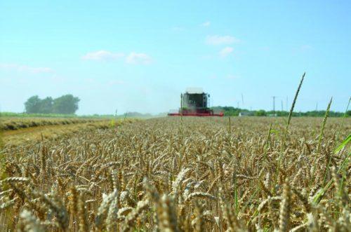 Campagne agricole 2017-2018: une récole céréalière exceptionnelle de 98.2 millions de quintaux