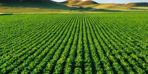 Le Maroc est une source d'inspiration en matière agricole