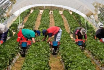 Exploitation d'ouvrières marocaines dans des exploitations agricoles espagnoles , le ministre du travail intervient