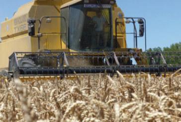 Campagne agricole: une récolte céréalière exceptionnelle de 98.2 millions de quintaux prévue