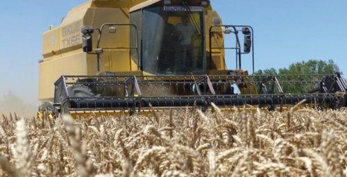 Campagne agricole: une récole céréalière exceptionnelle de 98.2 millions de quintaux prévue