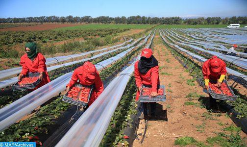 Travailleuses marocaines à Huelva: un seul cas d'harcèlement sexuel