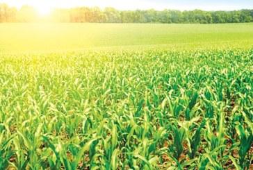 Le secteur agricole marocain, un solide pilier économique