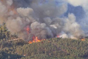 Taounate : 9 ha de forêt ravagés, l'incendie circonscrit
