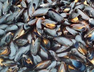 Ras kebdana: Interdiction de la récolte et de la commercialisation des coquillages