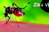 Inde: 22 cas de Zika confirmés dans le nord