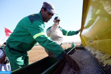 Campagne céréalière : Plus de 16 millions de quintaux de blé tendre à la mi-septembre