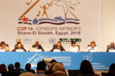 Egypte: coup d'envoi de la 14è Conférence des Parties à la COP14, avec la participation du Maroc