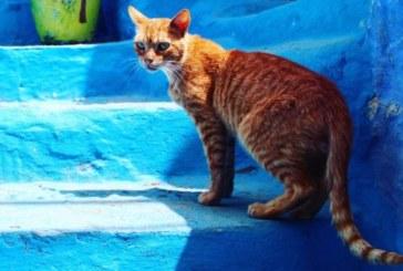 Un Britannique décède de la rage après une morsure de chat au Maroc