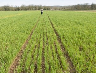 Campagne agricole