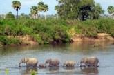 La Tanzanie va construire une centrale hydroélectrique dans un site classé