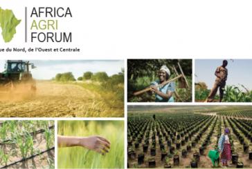 L'accès au financement, principale entrave à la transformation de l'agriculture dans le continent
