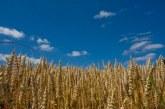 Benslimane : un total de 93 mille ha emblavés en céréales d'automne