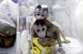 La Chine clone des singes pour la recherche sur les troubles du sommeil