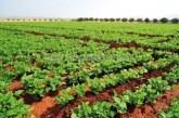 Fès-Meknès: La campagne agricole 2018-2019 se déroule dans des ''conditions normales''