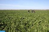 Région Béni Mellal-Khénifra : impact positif des récentes pluies sur la campagne agricole
