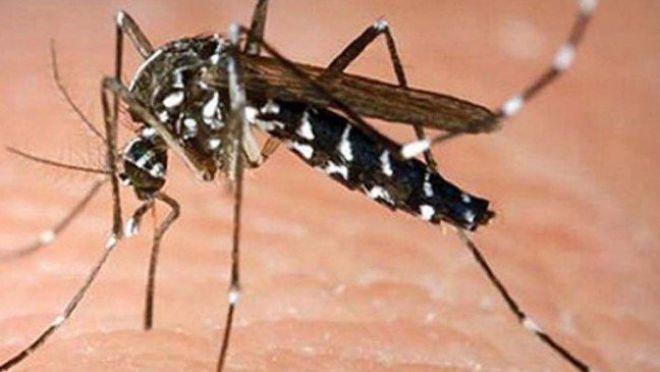 Rwanda : le drone anti-moustiques, nouvelle arme contre la malaria