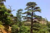 Déforestation systématique des forêts de cèdre au Moyen-atlas