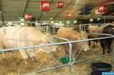 Fièvre aphteuse: L'opération de vaccination du cheptel de bovin se poursuit dans tout le Royaume