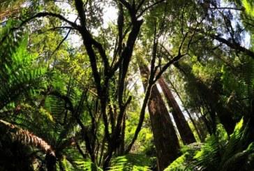 L'Australie compte planter 1 milliard d'arbres pour atteindre ses objectifs climatiques