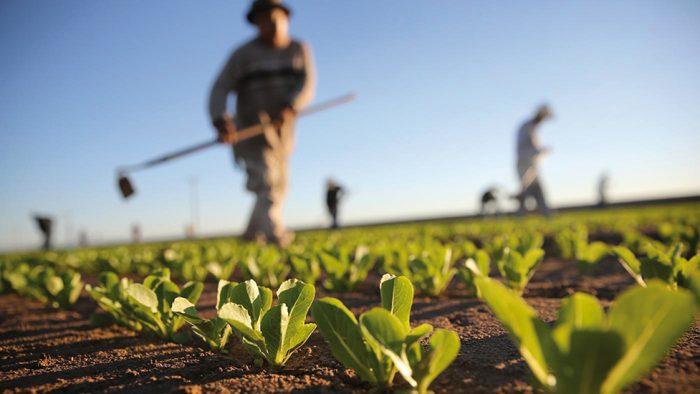 L'agriculture, outil efficace de lutte contre la pauvreté en milieu rural