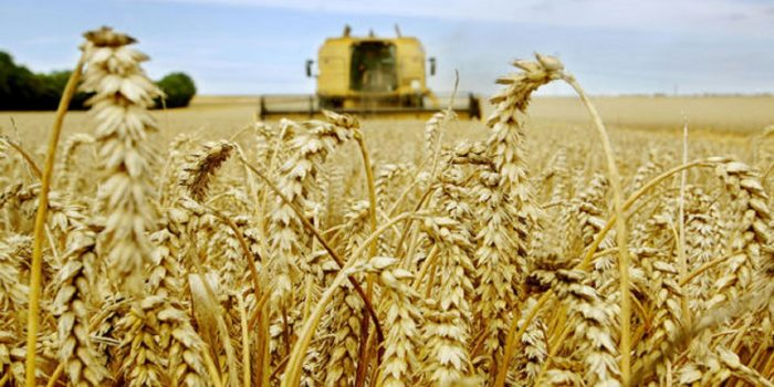 Les opérateurs australiens intéressés par le marché marocain des céréales