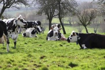 "Un cas atypique de ""maladie de la vache folle"" découvert en Pologne"