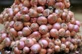 Saison agricole 2017-2018: Plus de 475.000 T d'oignon produites à Fès-Meknès
