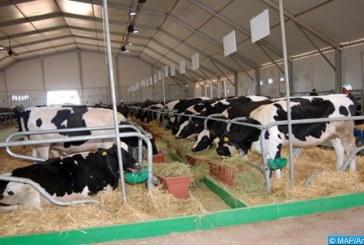 Fièvre aphteuse: Plus de 2,5 millions de bovins vaccinés jusqu'au 28 février dernier
