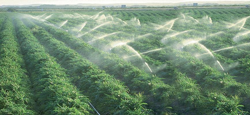 Plan Maroc Vert : Des acquis à consolider