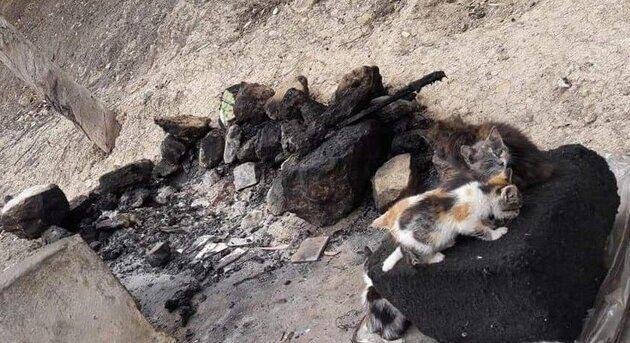 quarantaine de chats brûlés vifs à safi
