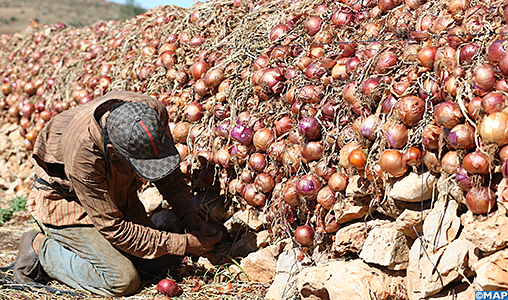 Oignon: Akhannouch explique les raisons de la hausse des prix