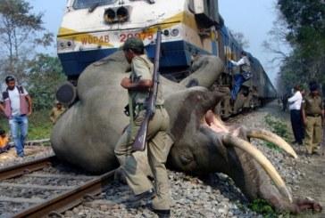 Inde: le son des abeilles pour éloigner les éléphants des rails