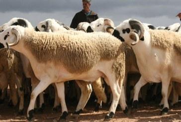 Aid Al Adha: El Ouafi appelle à la valorisation des peaux dans les industries du cuir