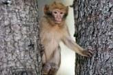 Ifrane : Atelier de formation sur la protection du singe magot