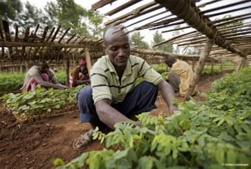 Ethiopie : Plus de 353 millions d'arbres plantés en une journée