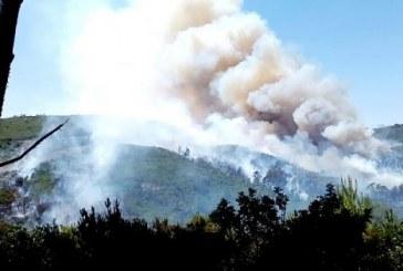 Province de Tétouan : incendie dans la forêt d'Aïn Lahcen