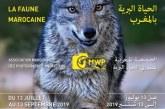 La faune et la biodiversité marocaines exposées au musée Mohammed VI