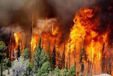 """Vaste incendie au Portugal : Les feux de forêt """"maîtrisés à 90%"""""""