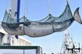 Japon: Reprise de la chasse commerciale à la baleine après 31 ans d'interruption